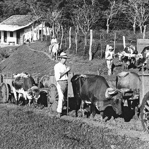 ¿Quién fue Félix Velarde en la historia del café en Costa Rica?